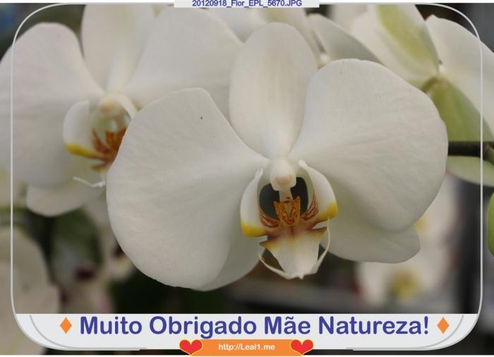 HqMV_20120918_Flor_EPL_5670