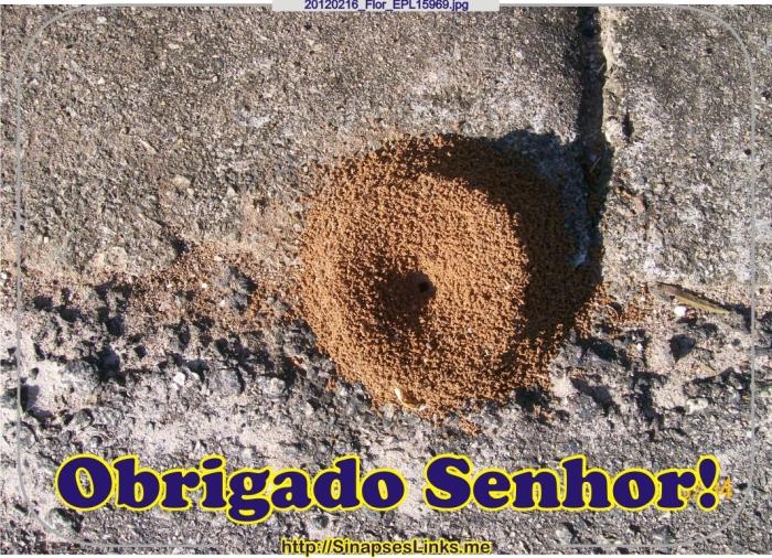 HRRv_20120216_Flor_EPL15969