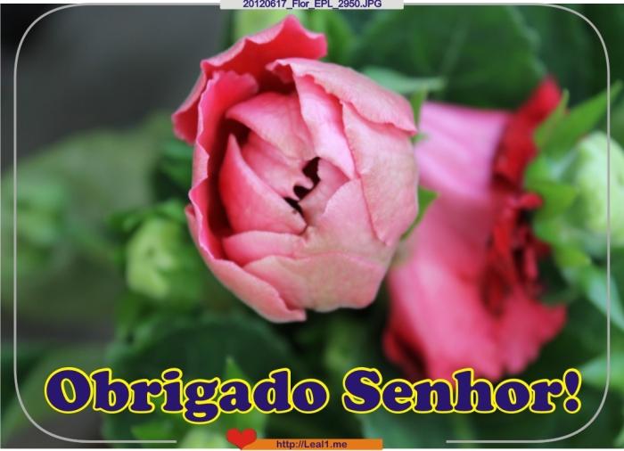 Hvmj_20120617_Flor_EPL_2950