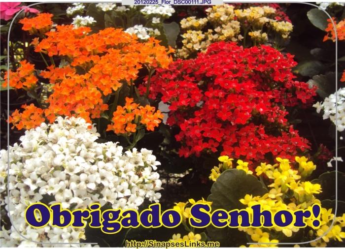 hVWE_20120225_Flor_DSC00111