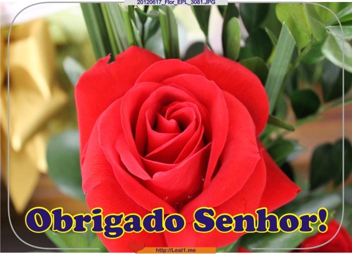HWlP_20120617_Flor_EPL_3081