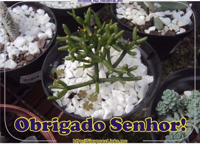 HWUr_20120225_Flor_DSC00138
