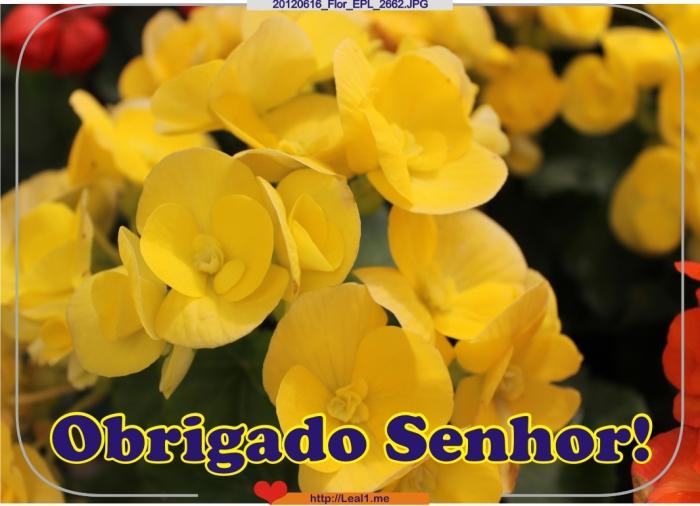HwXv_20120616_Flor_EPL_2662