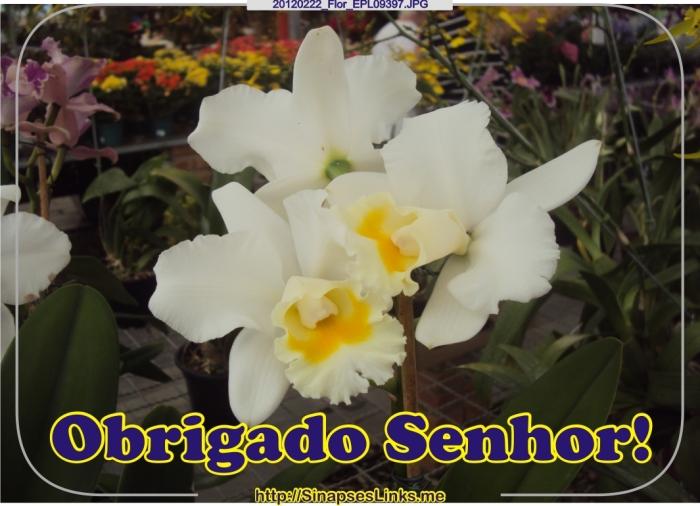 HXmw_20120222_Flor_EPL09397