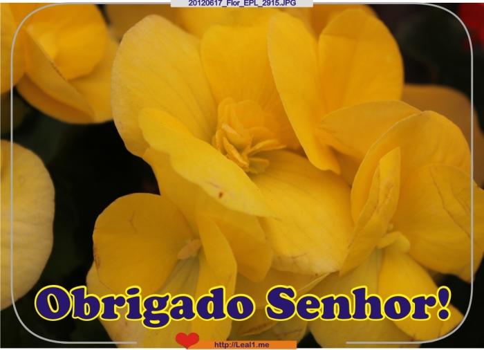 hZwX_20120617_Flor_EPL_2915