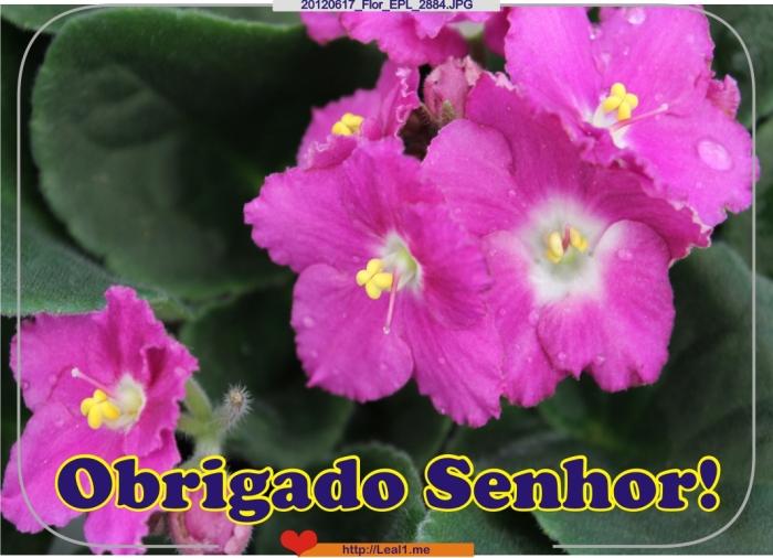 IcTr_20120617_Flor_EPL_2884