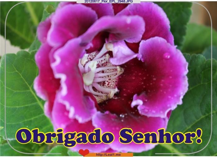 IDwt_20120617_Flor_EPL_2948