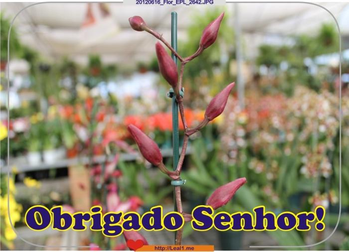IHXG_20120616_Flor_EPL_2642