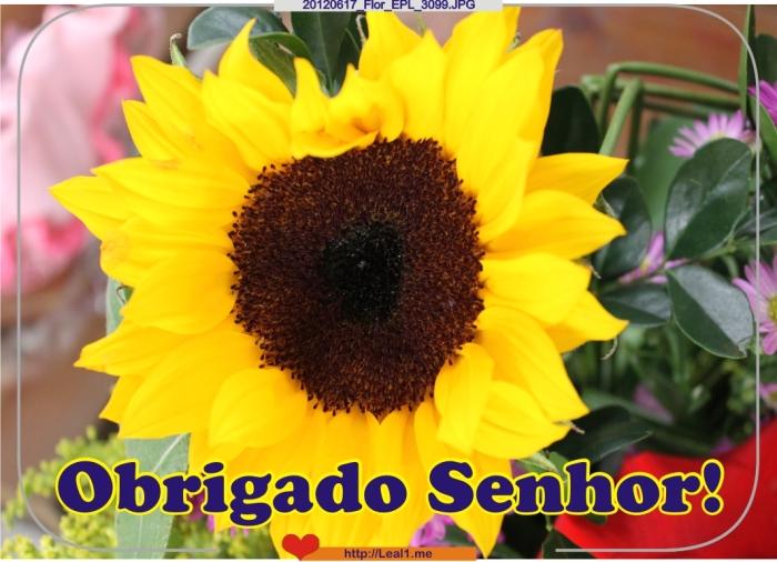 iJiD_20120617_Flor_EPL_3099