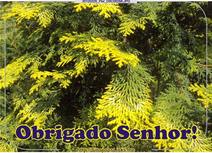 Imfc_20120225_Flor_DSC00258