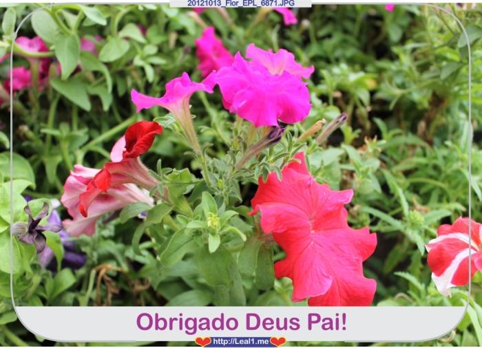 ipBk_20121013_Flor_EPL_6871