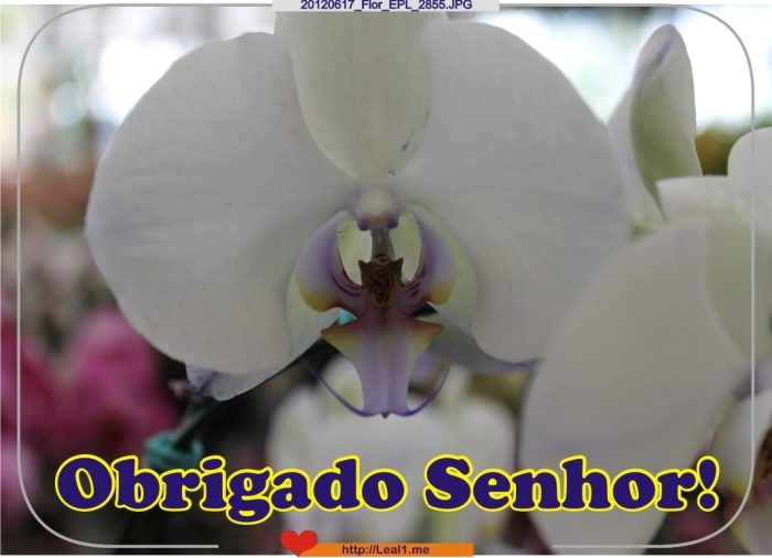 IPDY_20120617_Flor_EPL_2855