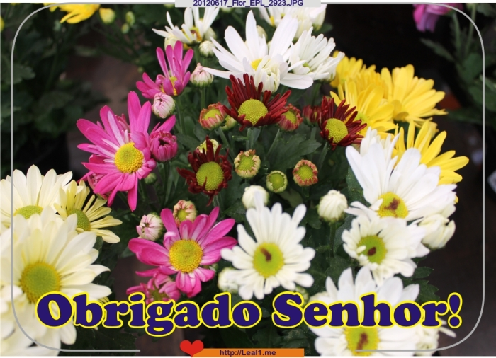 Isdf_20120617_Flor_EPL_2923