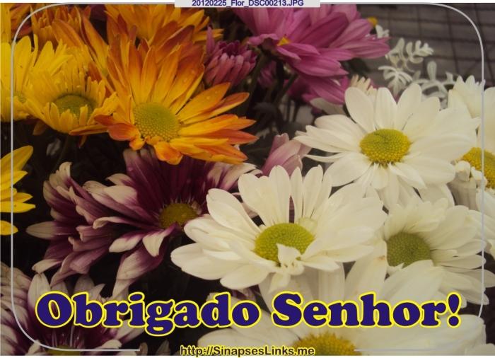 ISIg_20120225_Flor_DSC00213