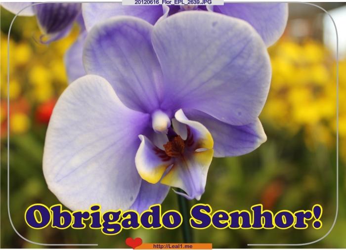 ItGw_20120616_Flor_EPL_2639