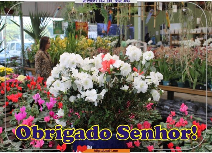 IugW_20120617_Flor_EPL_3026
