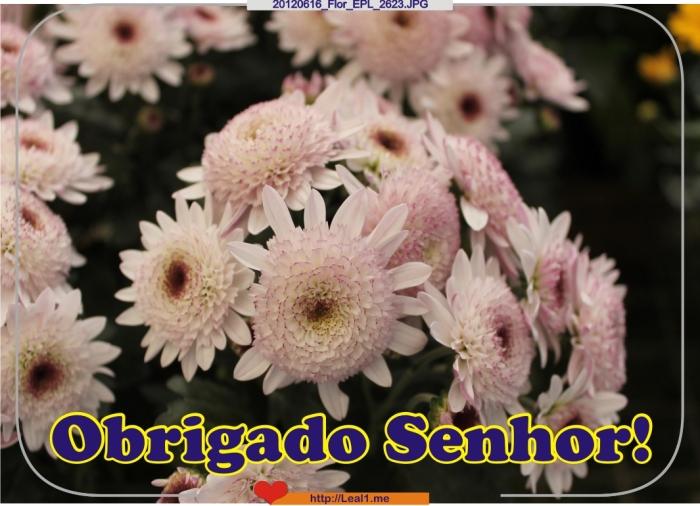 IwFD_20120616_Flor_EPL_2623