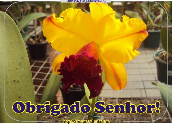 iwIF_20120225_Flor_DSC00228