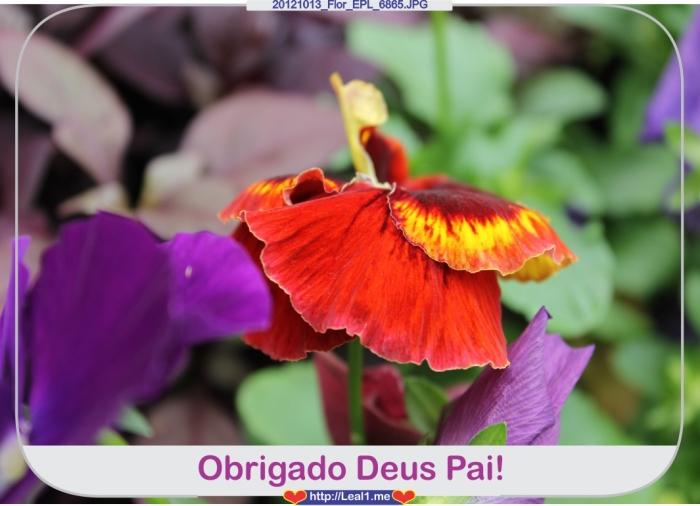 iXDC_20121013_Flor_EPL_6865