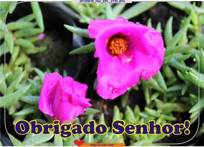 IYQv_20120616_Flor_EPL_2733