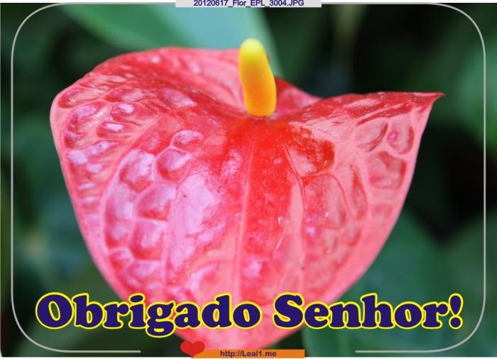Izjz_20120617_Flor_EPL_3004
