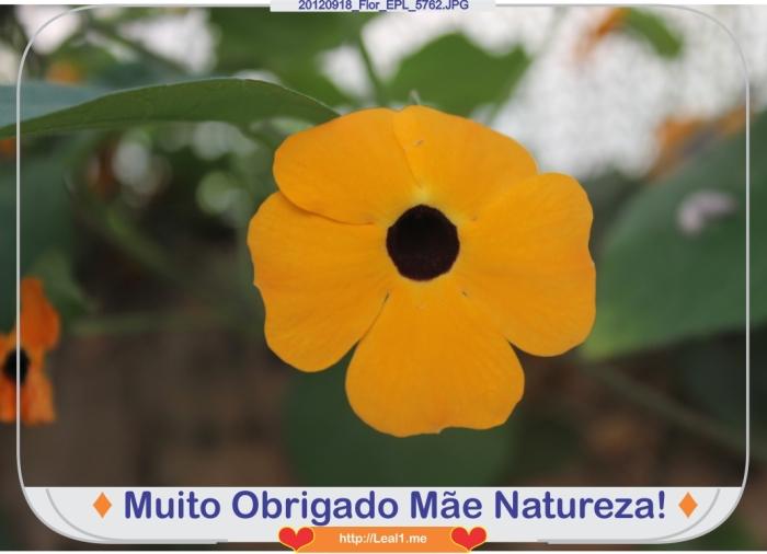 JaNc_20120918_Flor_EPL_5762