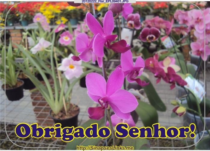 JAxH_20120222_Flor_EPL09401