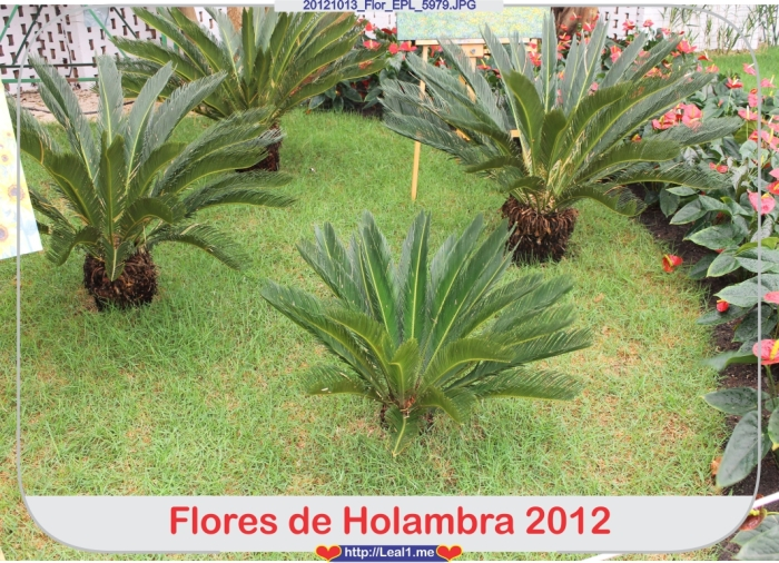jDqS_20121013_Flor_EPL_5979