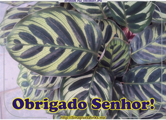 jGLj_20120225_Flor_DSC00241