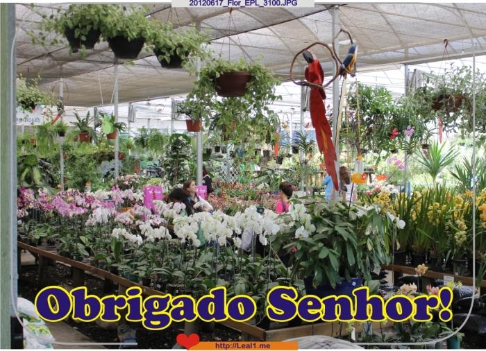 jhlk_20120617_Flor_EPL_3100