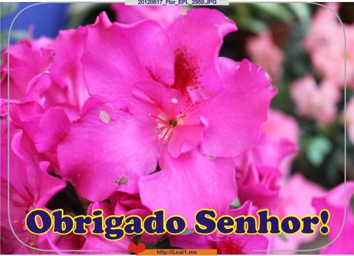 Jhnf_20120617_Flor_EPL_2959