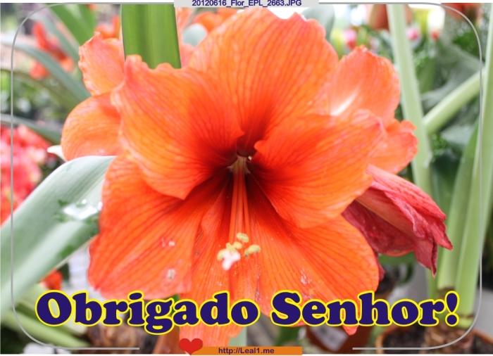 JhOl_20120616_Flor_EPL_2663