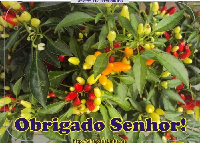 jLiD_20120225_Flor_DSC00066