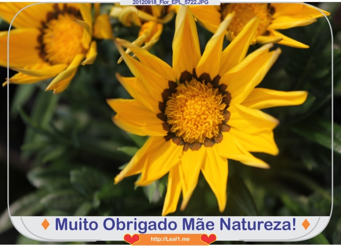 JMBi_20120918_Flor_EPL_5722