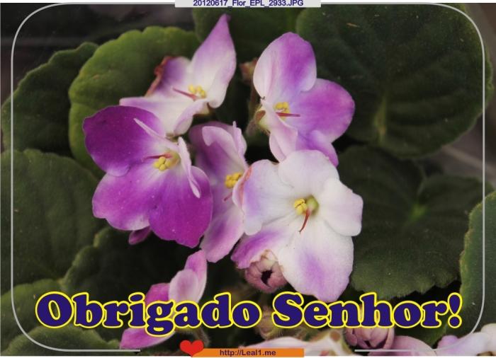 jmmp_20120617_Flor_EPL_2933