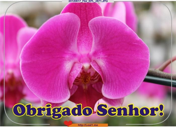 JmSW_20120617_Flor_EPL_2871