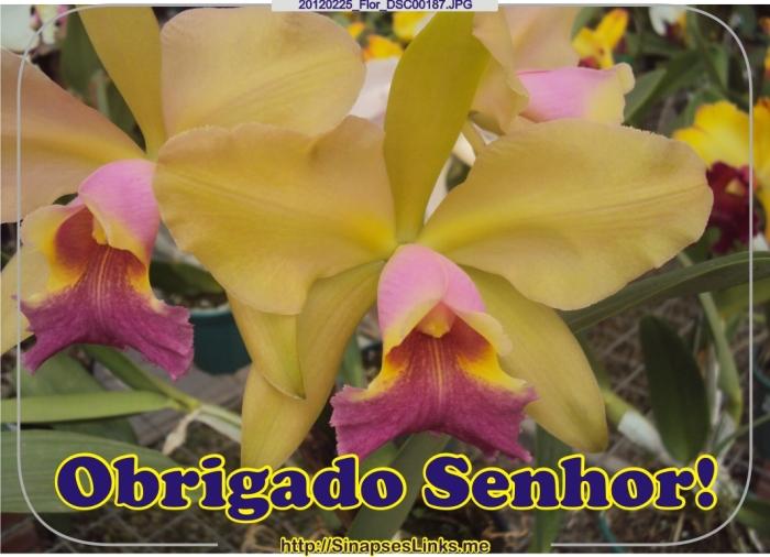 JPrN_20120225_Flor_DSC00187