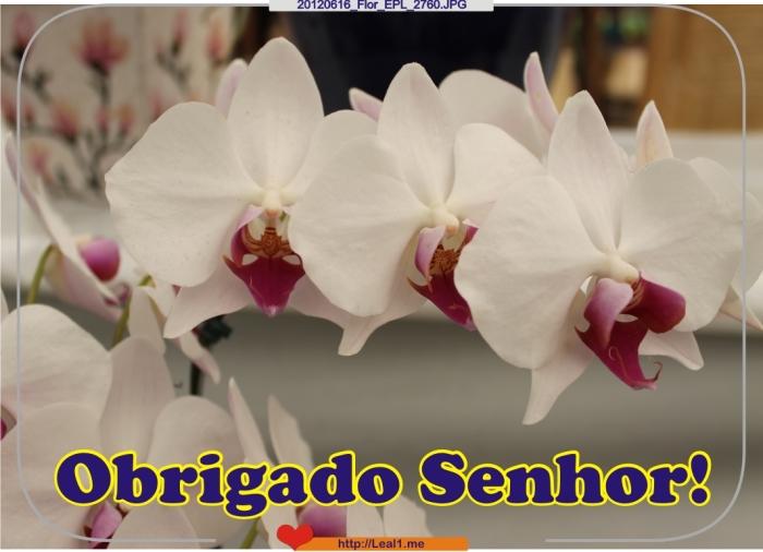 JSwo_20120616_Flor_EPL_2760