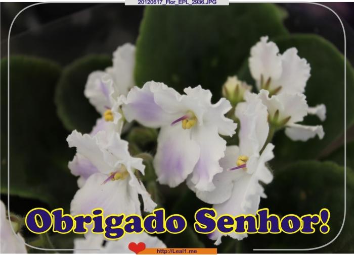 jUhJ_20120617_Flor_EPL_2936