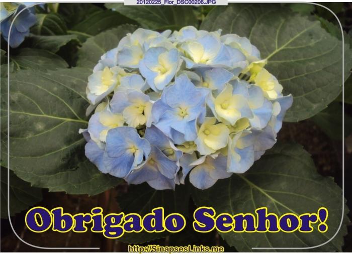 jvCb_20120225_Flor_DSC00206