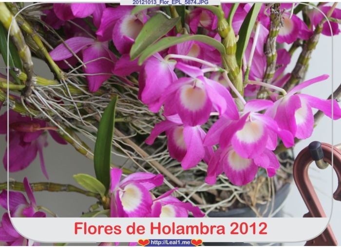 JwNx_20121013_Flor_EPL_5874