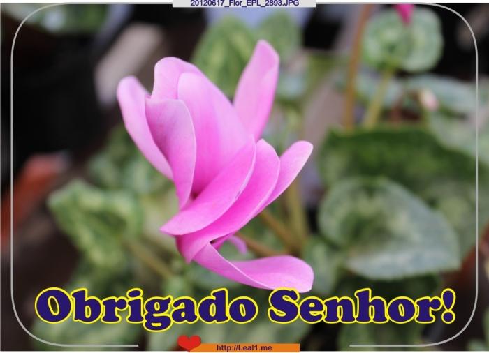 Jzig_20120617_Flor_EPL_2893