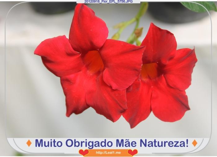 Kach_20120918_Flor_EPL_5756