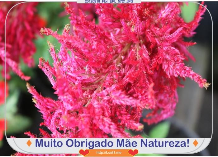 KarR_20120918_Flor_EPL_5721