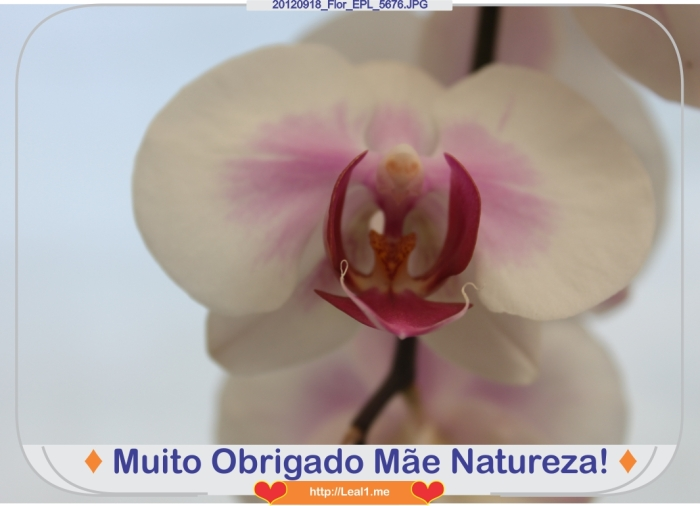 KbRv_20120918_Flor_EPL_5676
