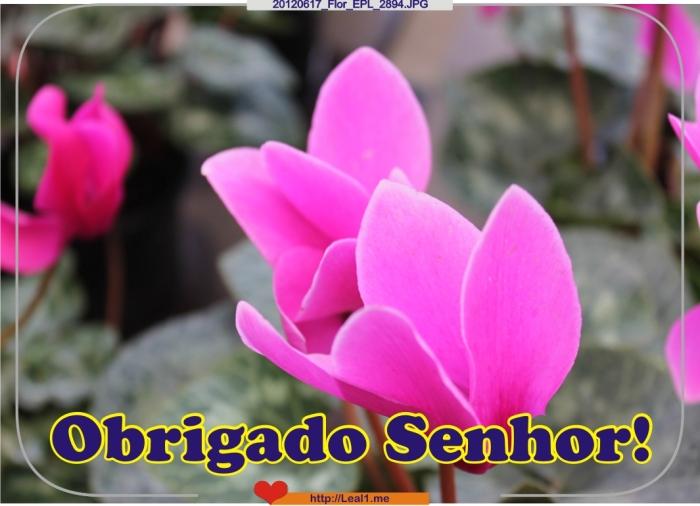 KdNK_20120617_Flor_EPL_2894
