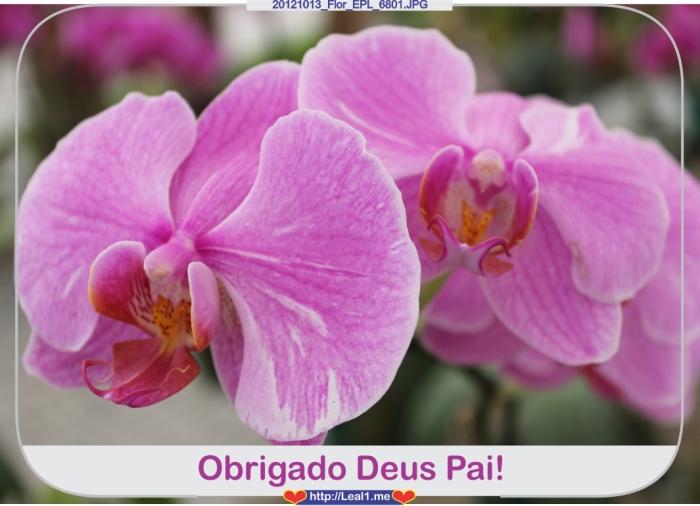 kehK_20121013_Flor_EPL_6801