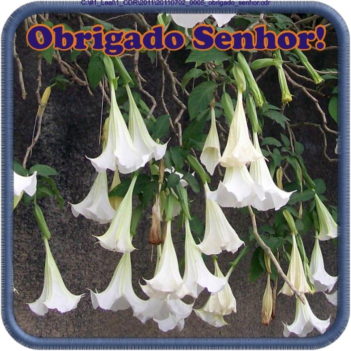 20110702_0005_obrigado_senhor