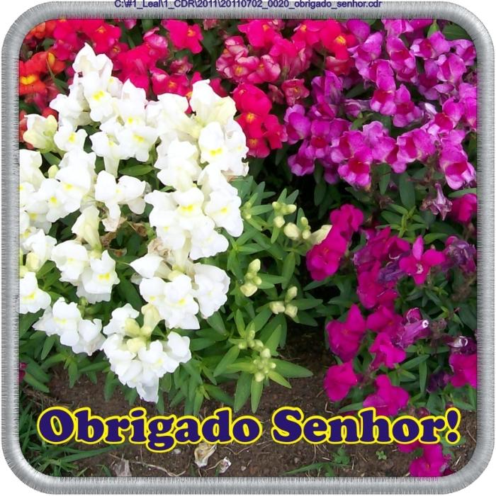 20110702_0020_obrigado_senhor