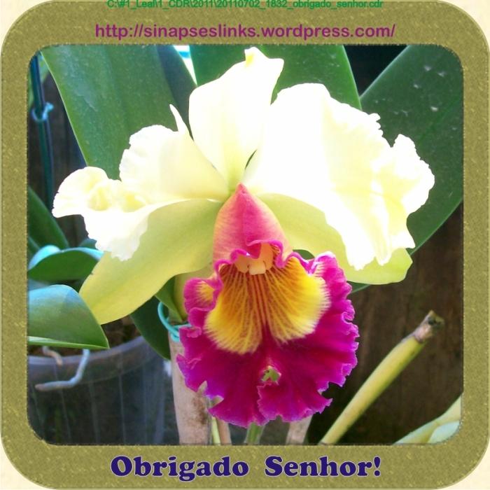 20110702_1832_obrigado_senhor